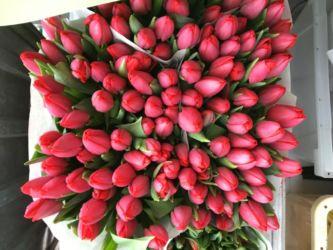 Tulpen nicht aus Amsterdam